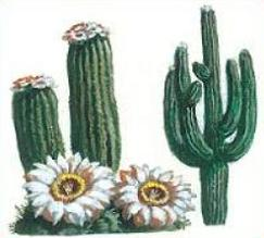 Cactus Blossom clipart #14, Download drawings