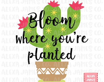 Cactus Blossom svg #20, Download drawings