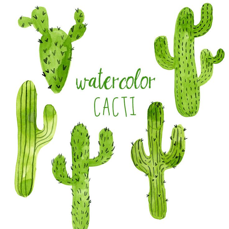 Cactus clipart #14, Download drawings