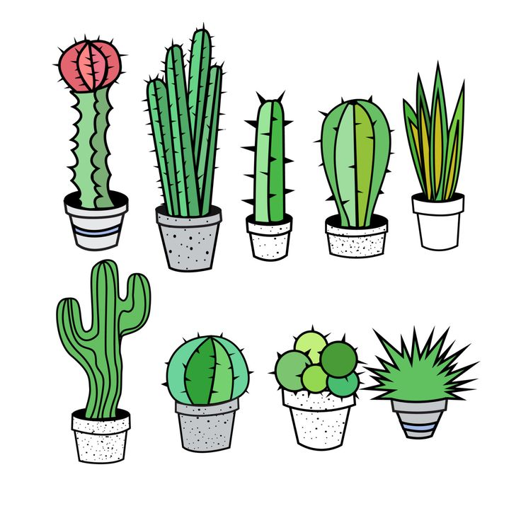Cactus clipart #13, Download drawings