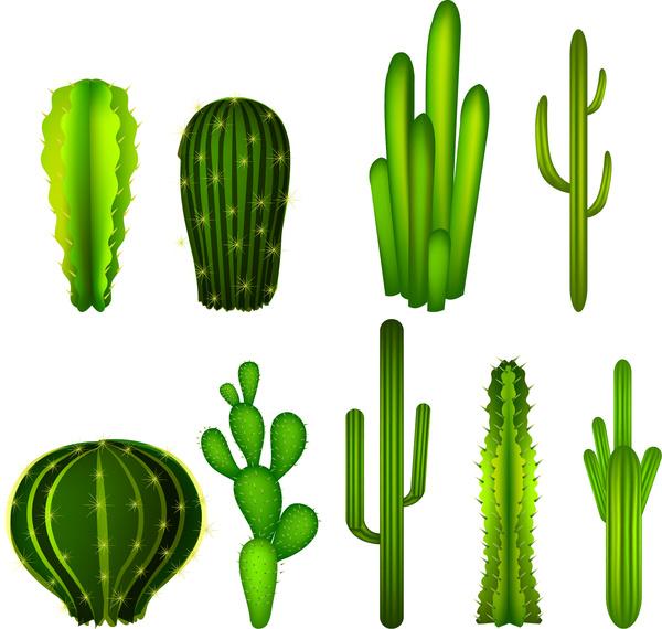 Cactus svg #8, Download drawings