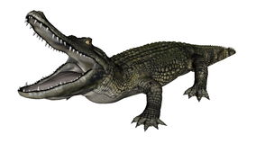 Caiman clipart #7, Download drawings