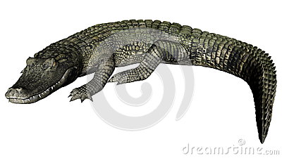 Caiman clipart #12, Download drawings
