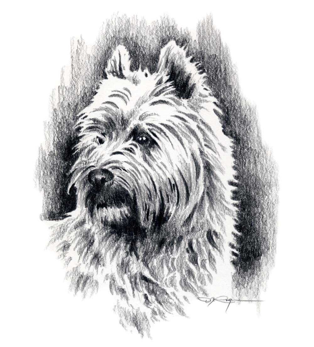 Cairn Terrier clipart #2, Download drawings