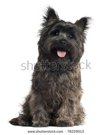 Cairn Terrier clipart #20, Download drawings