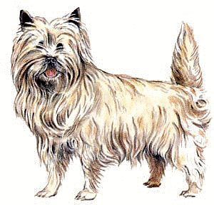 Cairn Terrier clipart #1, Download drawings