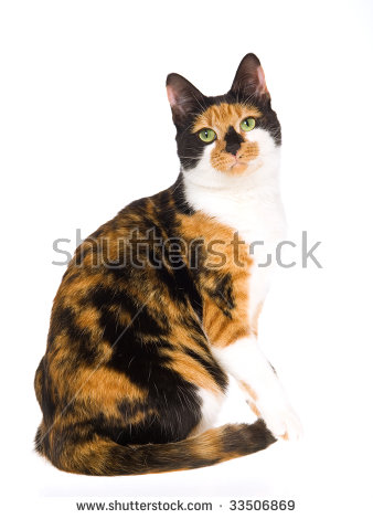 Calico Cat clipart #11, Download drawings