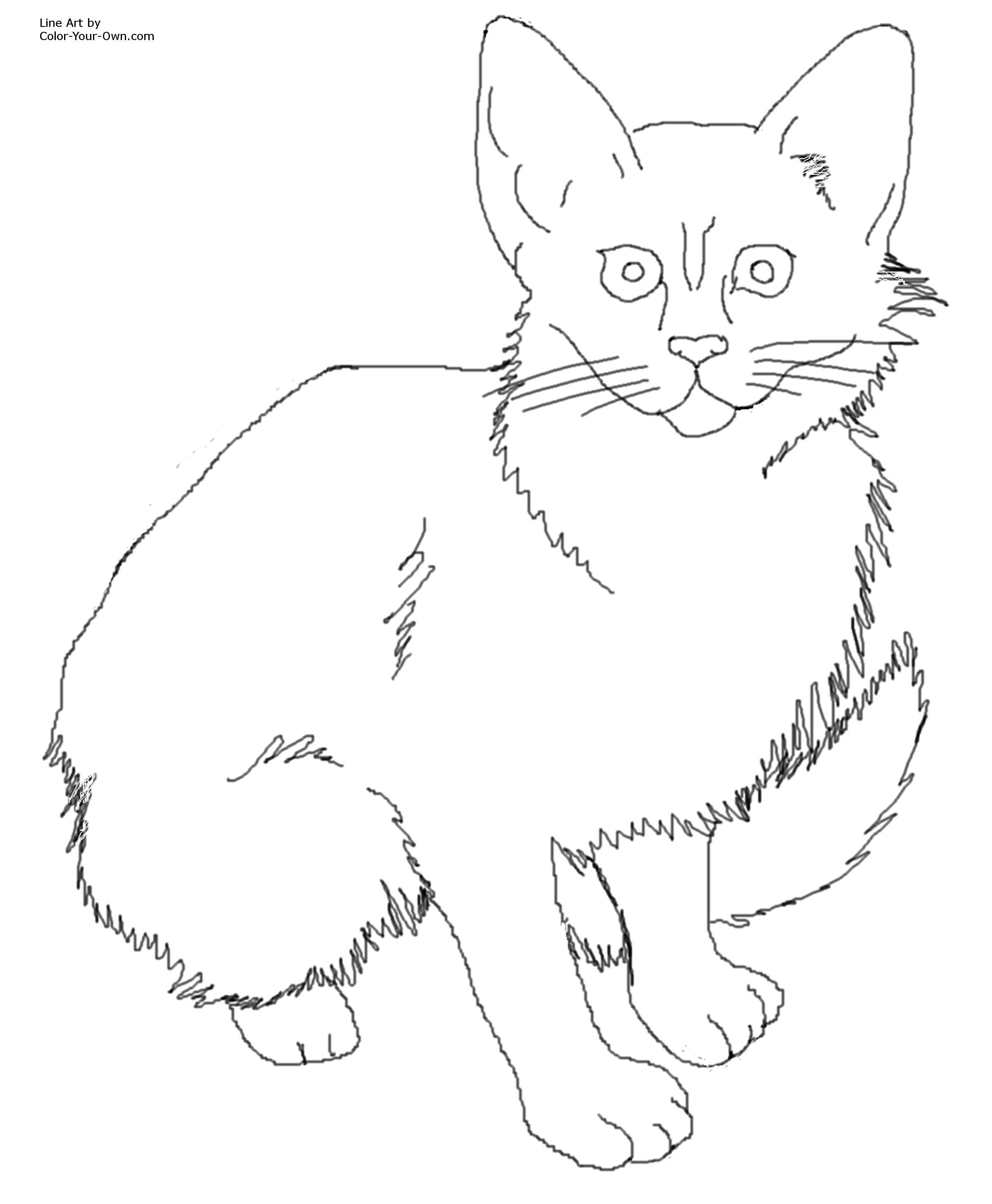 Calico Cat coloring Download Calico