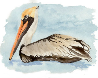 California Brown Pelicans clipart #5, Download drawings