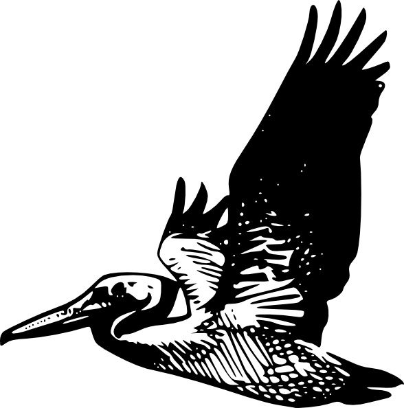 California Brown Pelicans svg #10, Download drawings