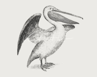 California Brown Pelicans svg #13, Download drawings