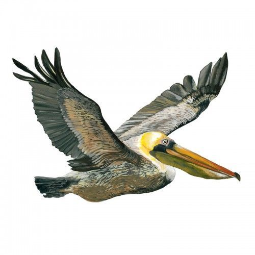 California Brown Pelicans svg #15, Download drawings