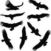 California Condor  clipart #12, Download drawings