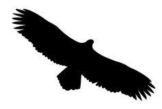 California Condor  clipart #13, Download drawings