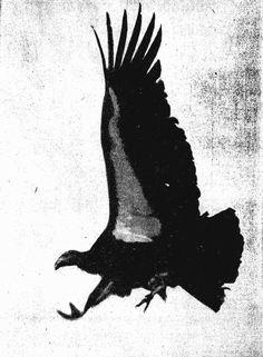 California Condor  clipart #5, Download drawings