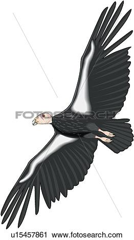 Condor clipart #4, Download drawings