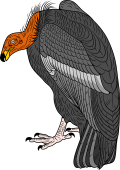 California Condor  clipart #11, Download drawings