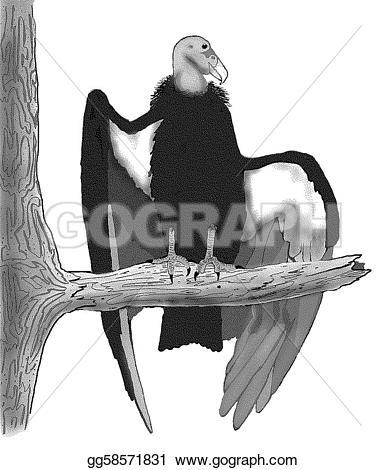 California Condor  clipart #17, Download drawings