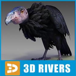 California Condor  svg #10, Download drawings