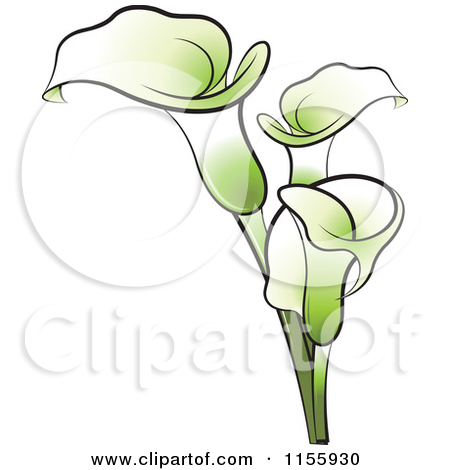 Calla clipart #20, Download drawings