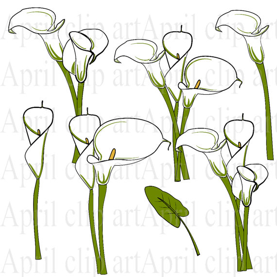 Calla clipart #8, Download drawings