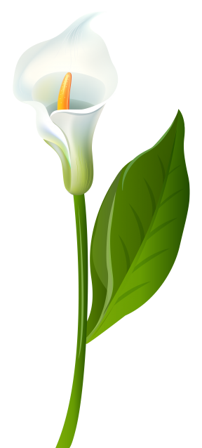 Calla Lily clipart #1, Download drawings