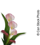 Calla Lily clipart #7, Download drawings