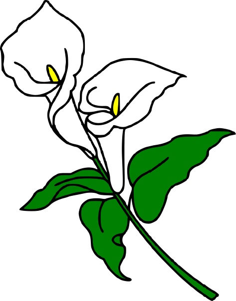 Calla Lily clipart #17, Download drawings