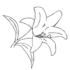 White Rain Lily coloring #3, Download drawings