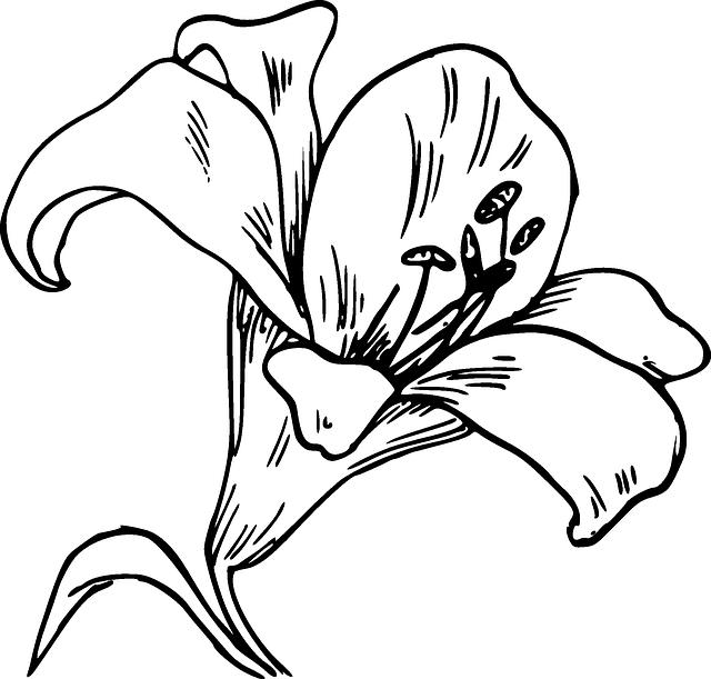 Calla svg #2, Download drawings