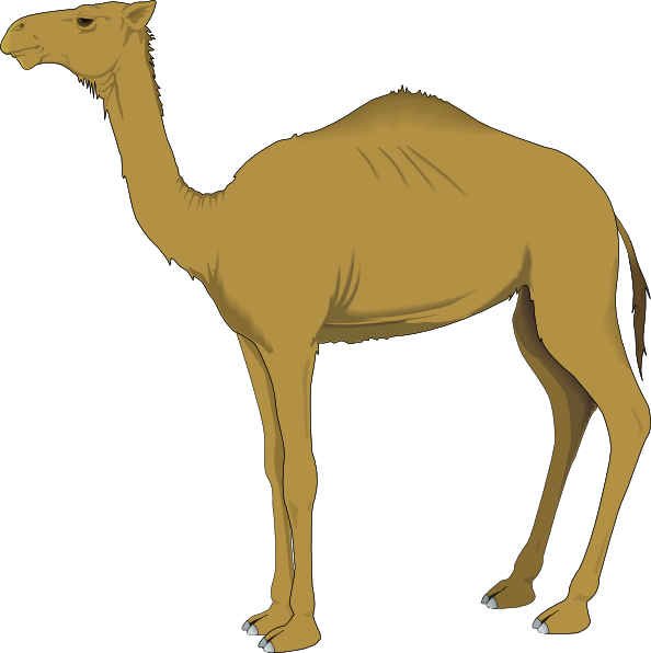 Camel clipart #15, Download drawings