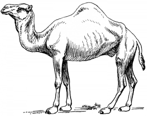 Camel clipart #7, Download drawings