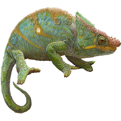 Cameleon clipart #4, Download drawings