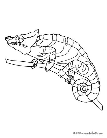 Chameleon coloring #17, Download drawings