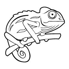 Chameleon coloring Download Chameleon coloring