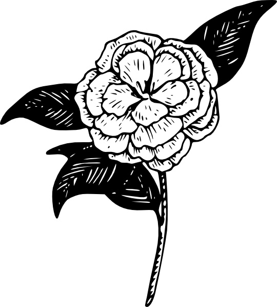 Camellia clipart #17, Download drawings