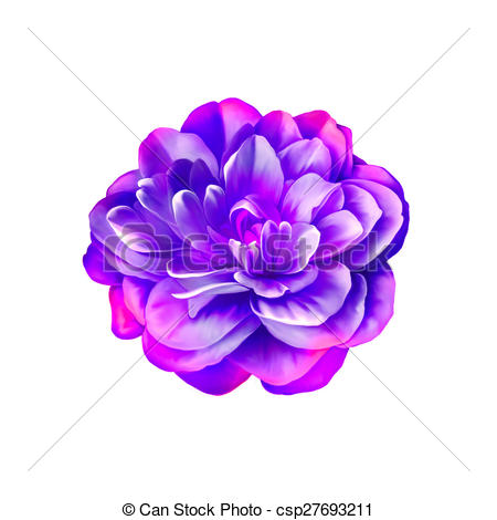 Camellia clipart #16, Download drawings