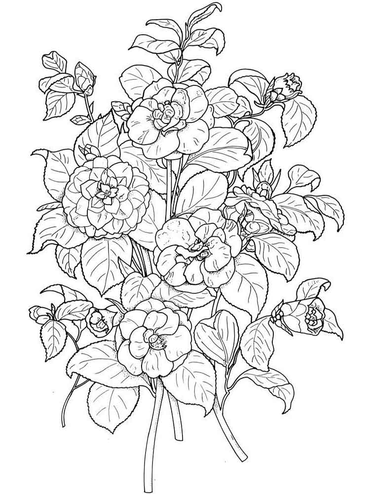 Camellia coloring #7, Download drawings