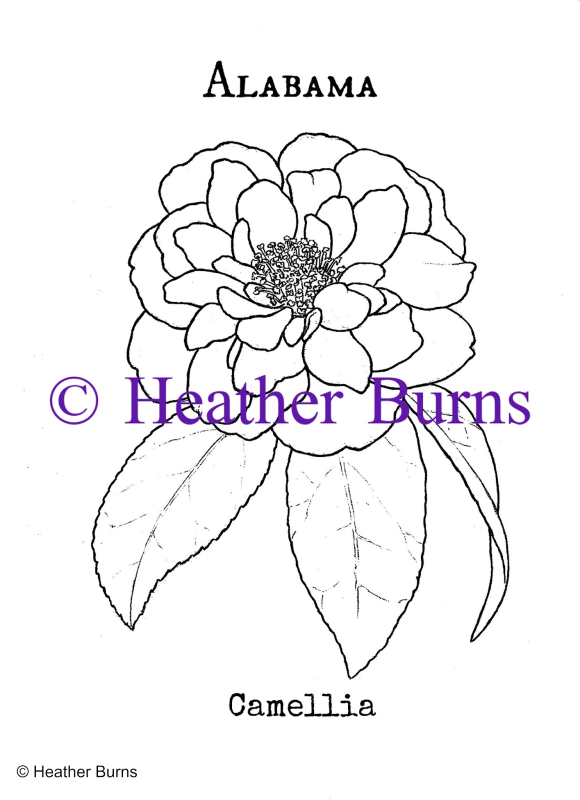 Camellia coloring #3, Download drawings