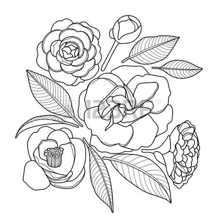 Camellia coloring #6, Download drawings