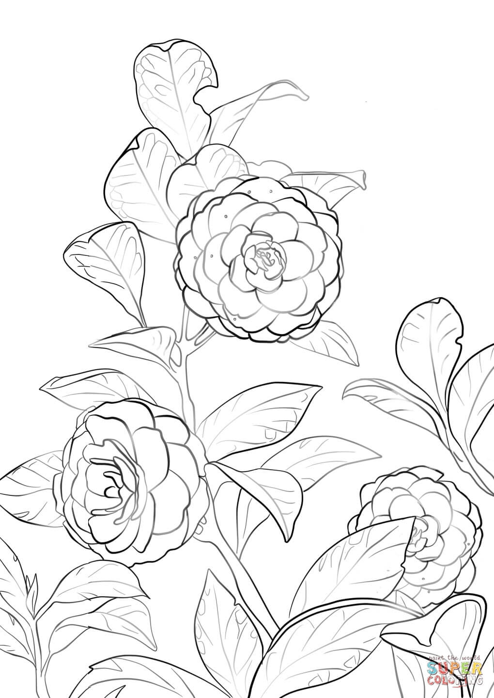 Camellia coloring #12, Download drawings