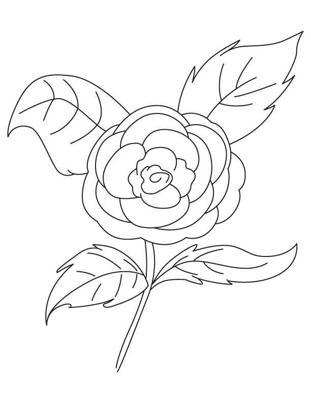 Camellia coloring #14, Download drawings
