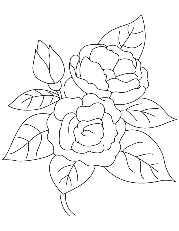 Camellia coloring #11, Download drawings