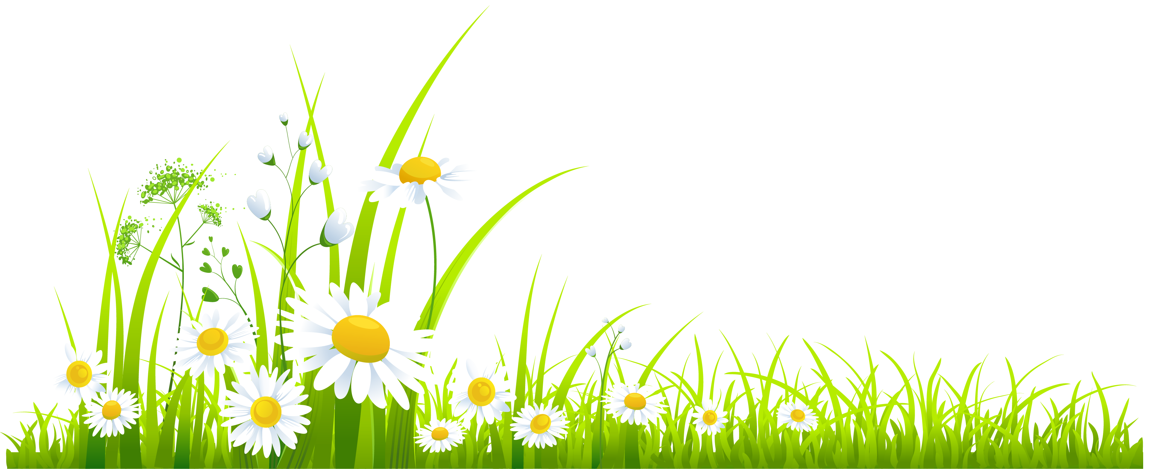 Camomile clipart #4, Download drawings