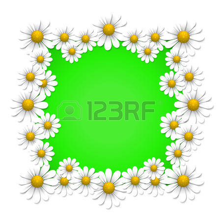 Camomile clipart #9, Download drawings