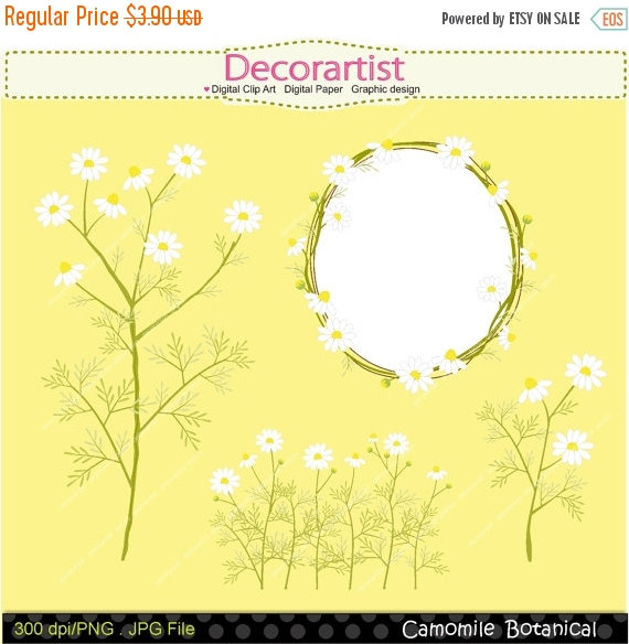 Camomile clipart #10, Download drawings