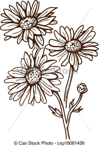 Camomile clipart #15, Download drawings