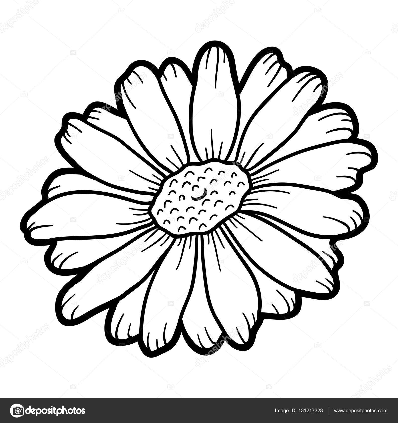 Chamomile coloring #4, Download drawings