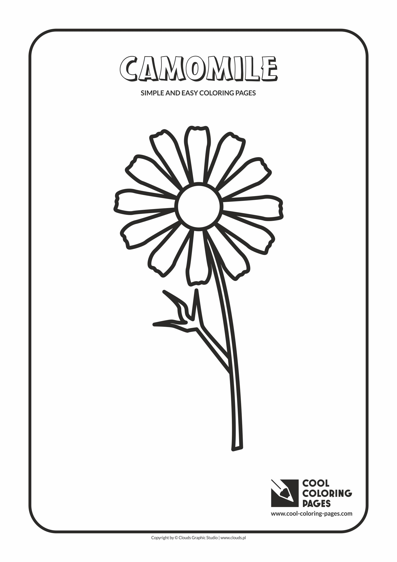 Camomile coloring #2, Download drawings
