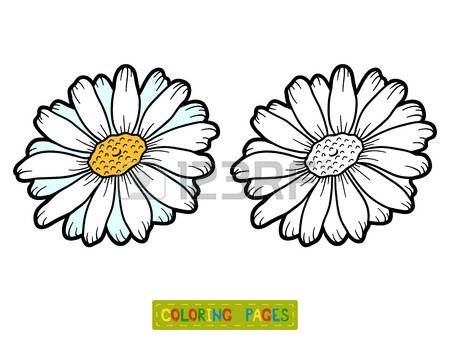 Chamomile coloring #2, Download drawings